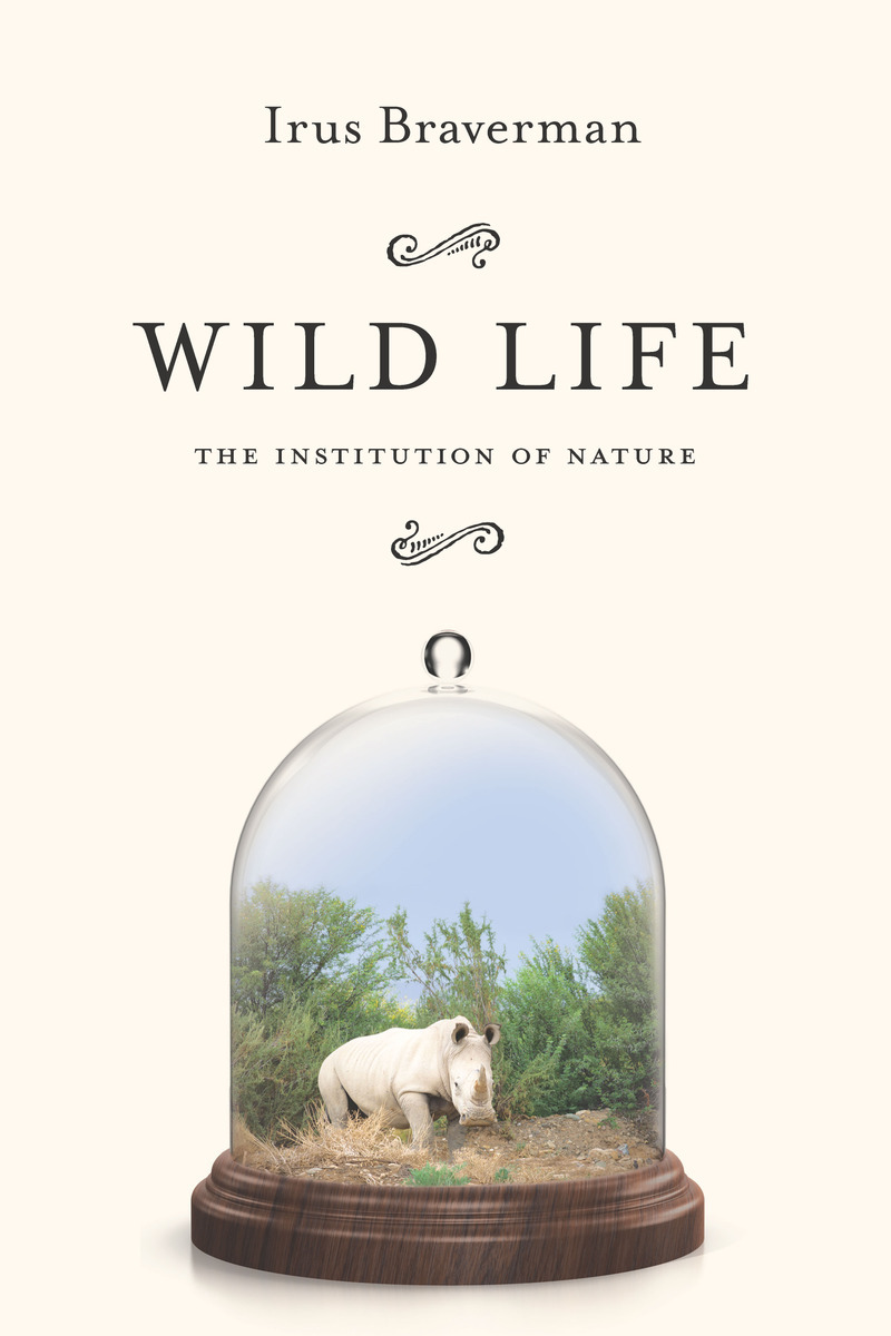 wild life New the connecticut alliance for america's fish and wildlifeour nation's fish and wildlife are among its most valuable resources scientists estimate that one third of all us wildlife species are already imperiled or are vulnerable.